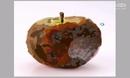 蔡叔叔讲画 7.创意绘画之慢慢烂掉的苹果