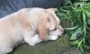 成都发生虐狗事件 小狗被抄起重重摔向地面