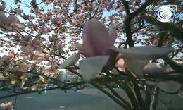 民生警务系列微电影